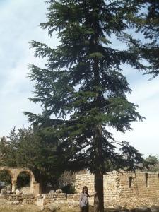 lebanon 107