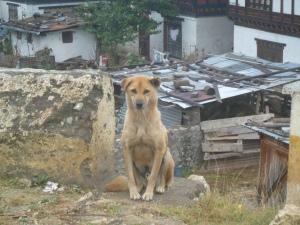 bhutan 029