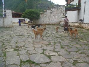 bhutan 044