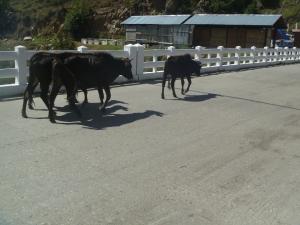 bhutan 063